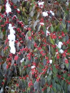 Love the winter berries