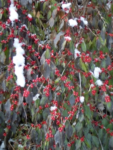 Love the winter berries